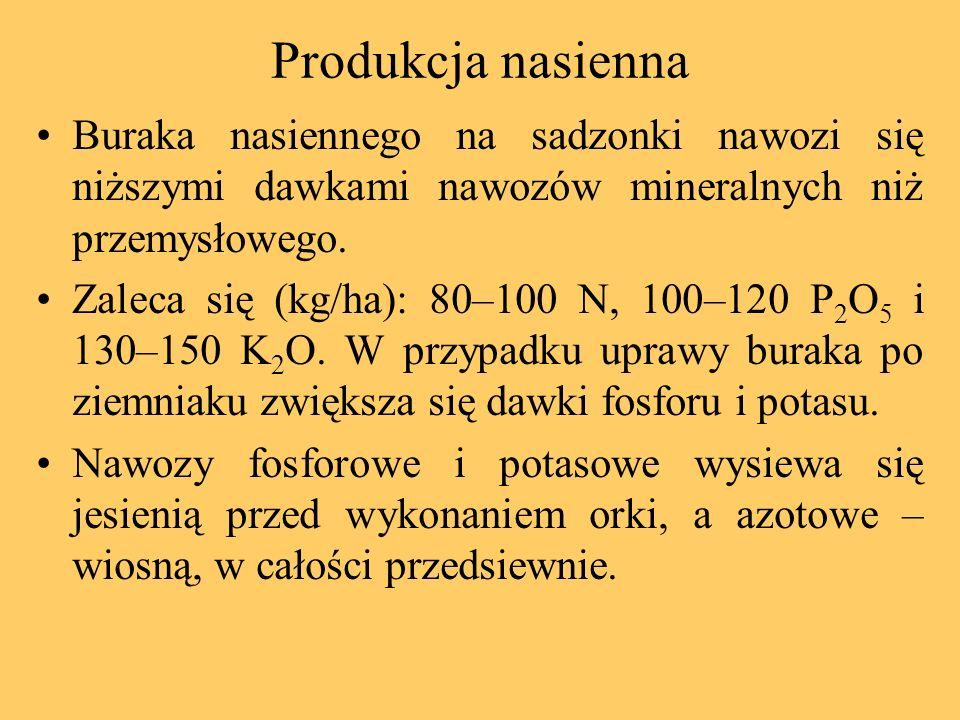 Produkcja nasienna Buraka nasiennego na sadzonki nawozi się niższymi dawkami nawozów mineralnych niż przemysłowego.