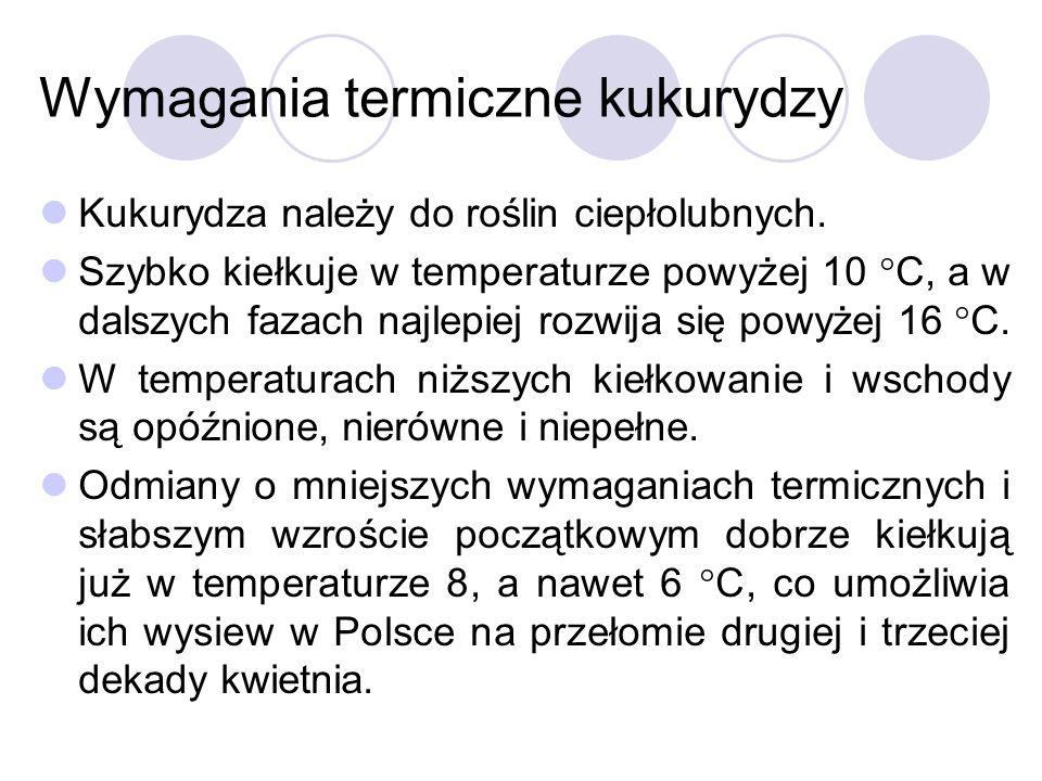 Wymagania termiczne kukurydzy