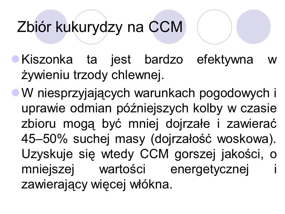 Zbiór kukurydzy na CCM Kiszonka ta jest bardzo efektywna w żywieniu trzody chlewnej.