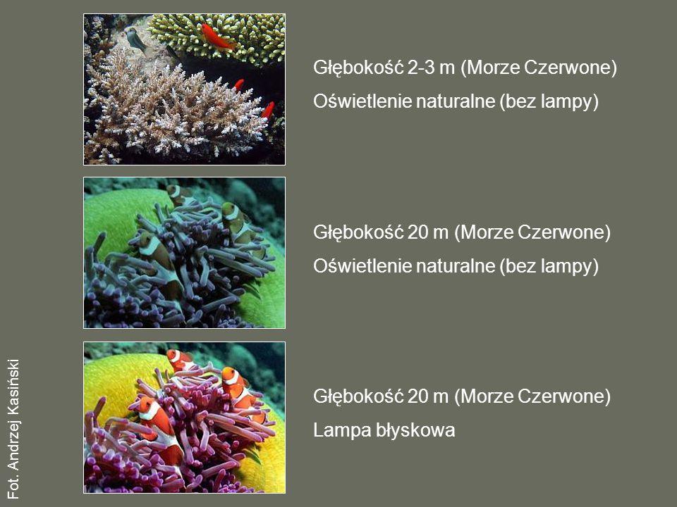 Głębokość 2-3 m (Morze Czerwone) Oświetlenie naturalne (bez lampy)