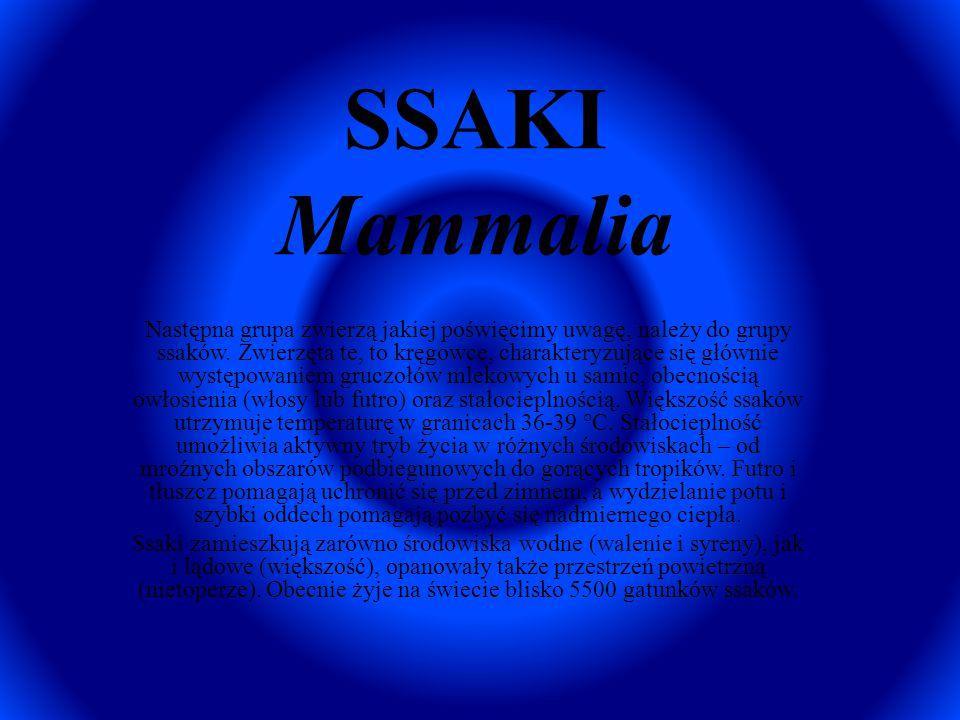 SSAKI Mammalia
