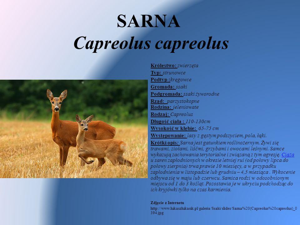 SARNA Capreolus capreolus