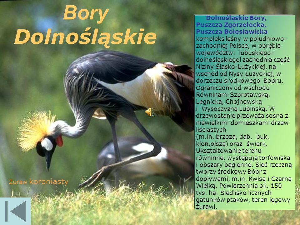 Bory Dolnośląskie.