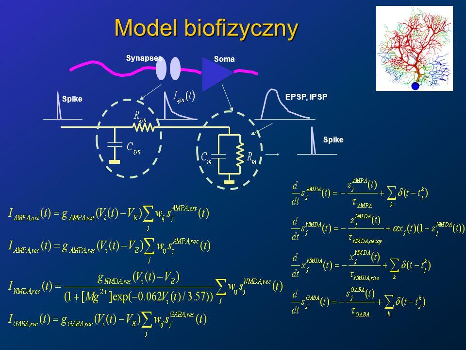 Model biofizyczny Synapses Soma EPSP, IPSP Spike