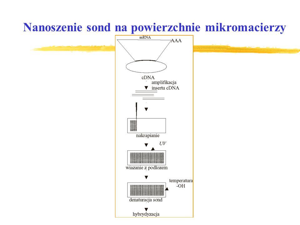Nanoszenie sond na powierzchnie mikromacierzy