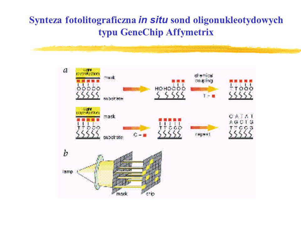 Synteza fotolitograficzna in situ sond oligonukleotydowych
