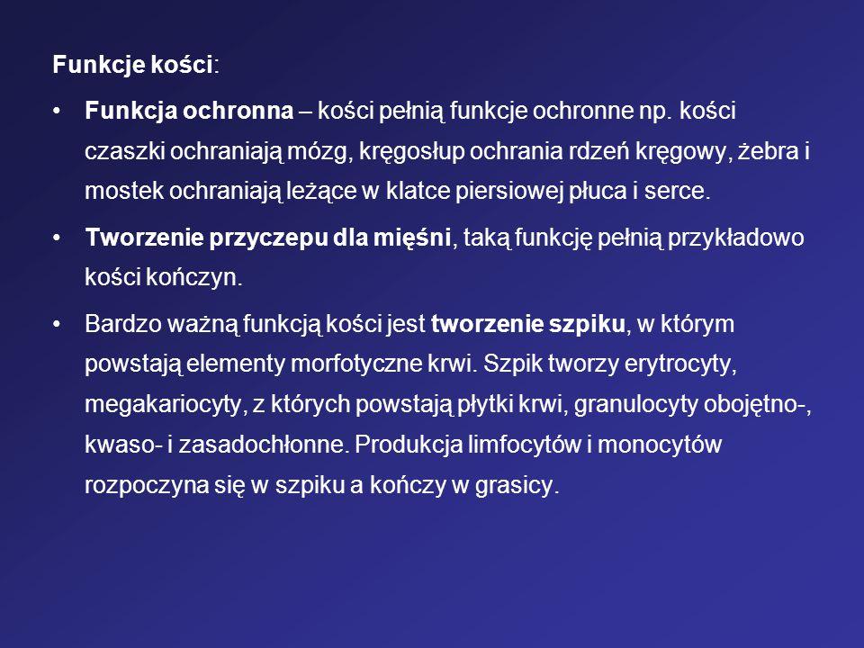 Funkcje kości: