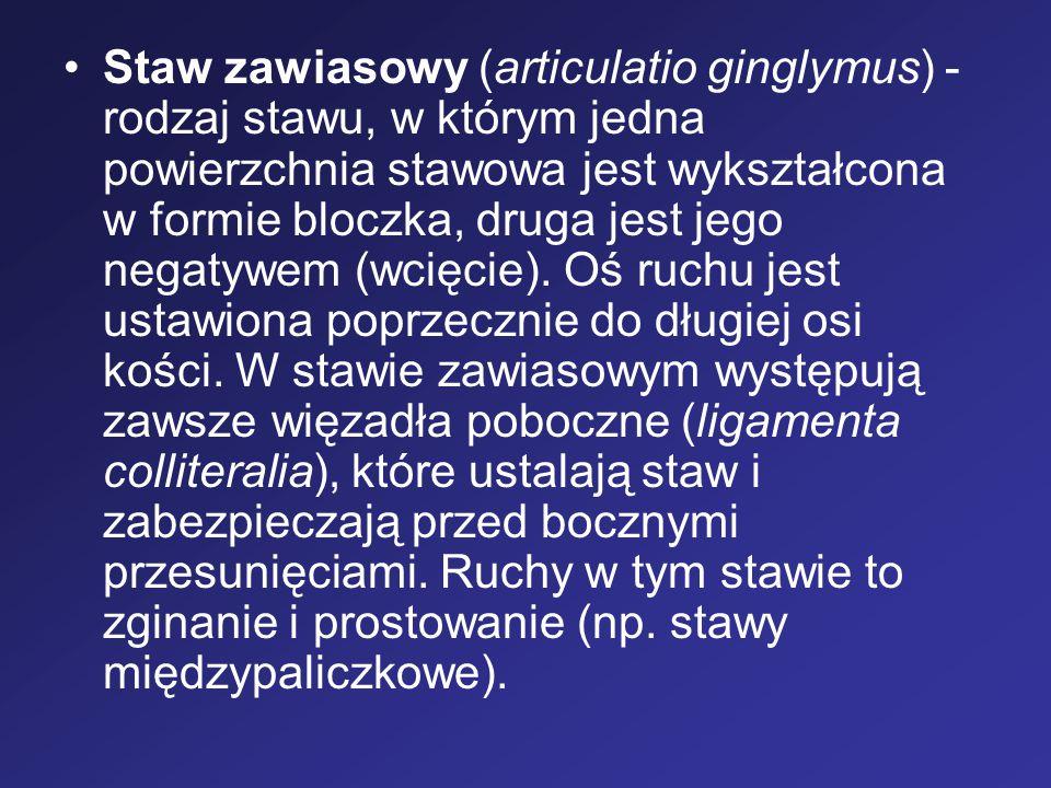 Staw zawiasowy (articulatio ginglymus) - rodzaj stawu, w którym jedna powierzchnia stawowa jest wykształcona w formie bloczka, druga jest jego negatywem (wcięcie).