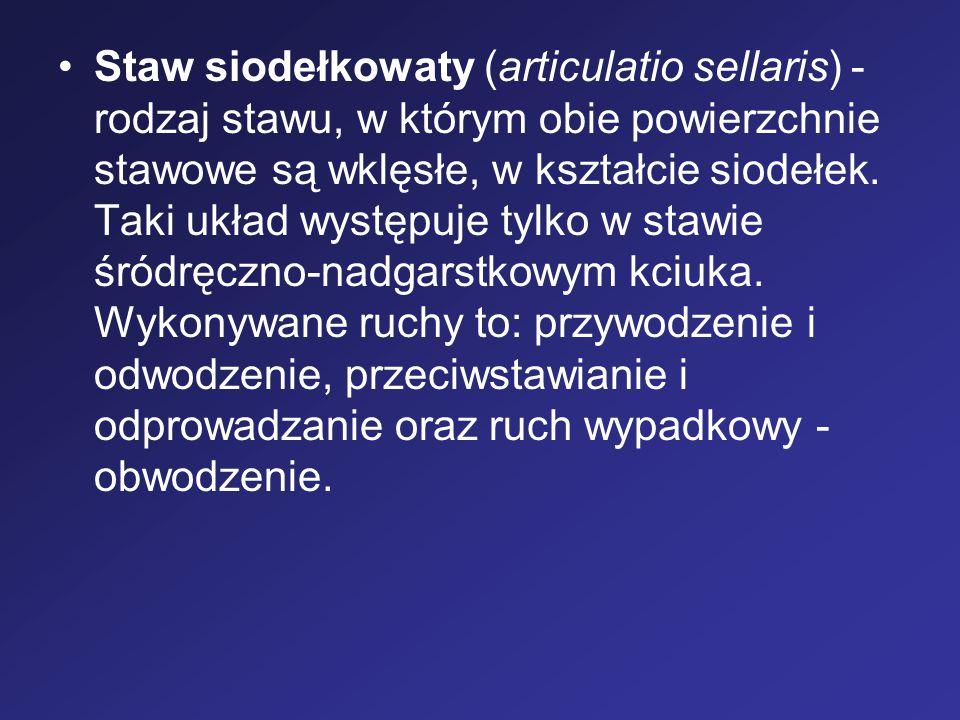 Staw siodełkowaty (articulatio sellaris) - rodzaj stawu, w którym obie powierzchnie stawowe są wklęsłe, w kształcie siodełek.