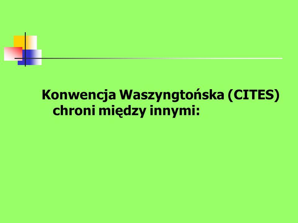 Konwencja Waszyngtońska (CITES) chroni między innymi: