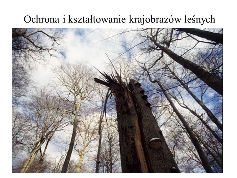 Ochrona i kształtowanie krajobrazów leśnych