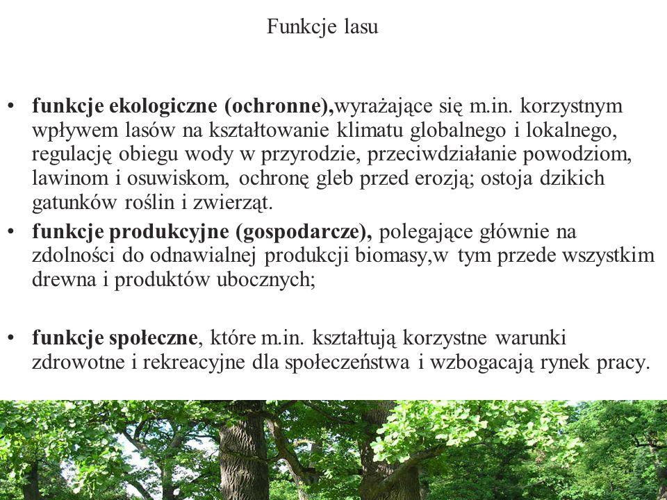 Funkcje lasu