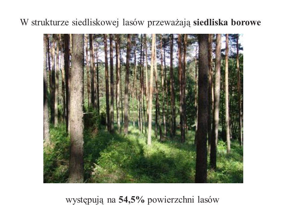 W strukturze siedliskowej lasów przeważają siedliska borowe