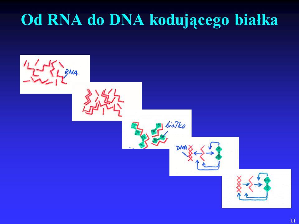 Od RNA do DNA kodującego białka