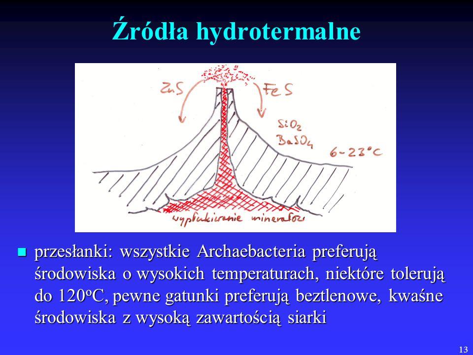 Źródła hydrotermalne