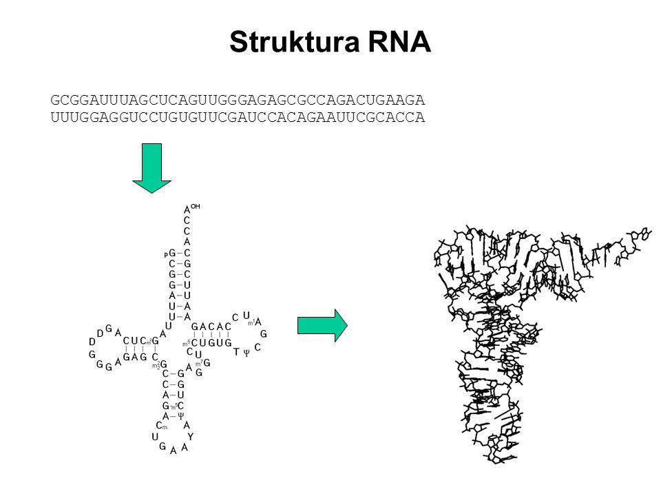 Struktura RNA GCGGAUUUAGCUCAGUUGGGAGAGCGCCAGACUGAAGA UUUGGAGGUCCUGUGUUCGAUCCACAGAAUUCGCACCA