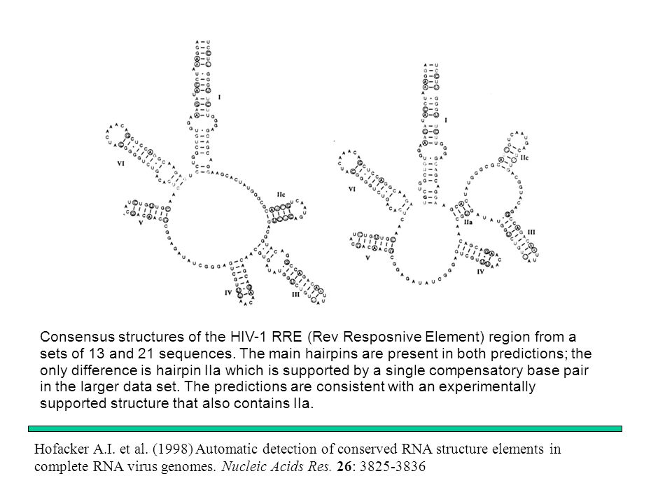 Consensus structures of the HIV-1 RRE (Rev Resposnive Element) region from a sets of 13 and 21 sequences. The main hairpins are present in both predictions; the only difference is hairpin IIa which is supported by a single compensatory base pair in the larger data set. The predictions are consistent with an experimentally supported structure that also contains IIa.