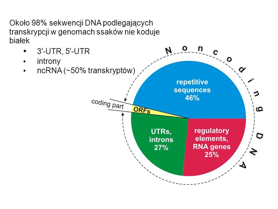 Około 98% sekwencji DNA podlegających transkrypcji w genomach ssaków nie koduje białek