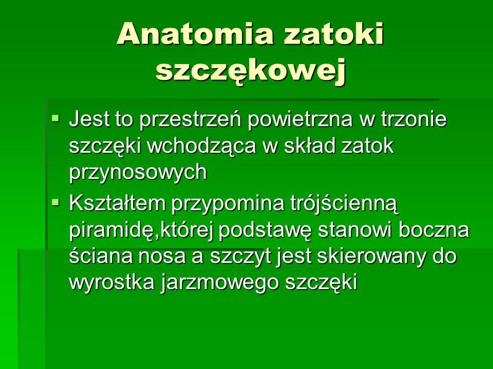 Anatomia zatoki szczękowej