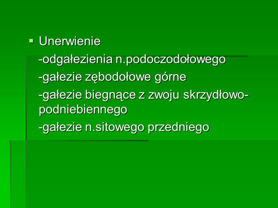Unerwienie -odgałezienia n.podoczodołowego. -gałezie zębodołowe górne. -gałezie biegnące z zwoju skrzydłowo- podniebiennego.