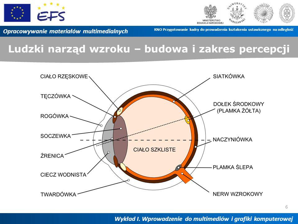 Ludzki narząd wzroku – budowa i zakres percepcji