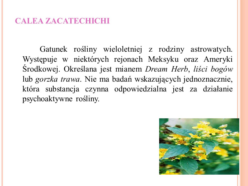 CALEA ZACATECHICHI