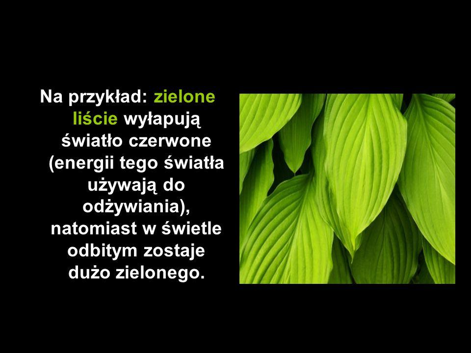Na przykład: zielone liście wyłapują światło czerwone (energii tego światła używają do odżywiania), natomiast w świetle odbitym zostaje dużo zielonego.