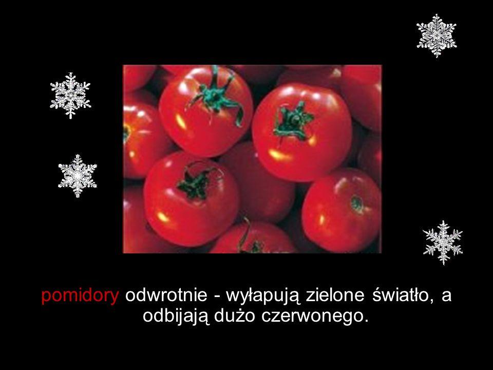 pomidory odwrotnie - wyłapują zielone światło, a odbijają dużo czerwonego.