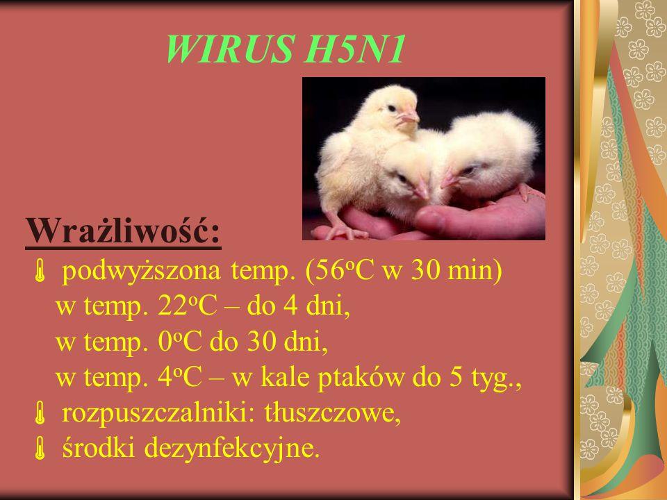 WIRUS H5N1 Wrażliwość:  podwyższona temp. (56oC w 30 min)