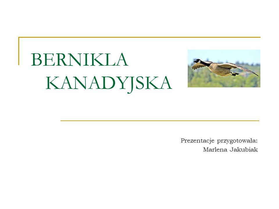 Prezentacje przygotowała: Marlena Jakubiak
