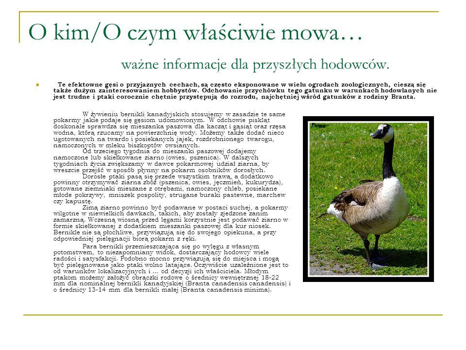 O kim/O czym właściwie mowa… ważne informacje dla przyszłych hodowców.