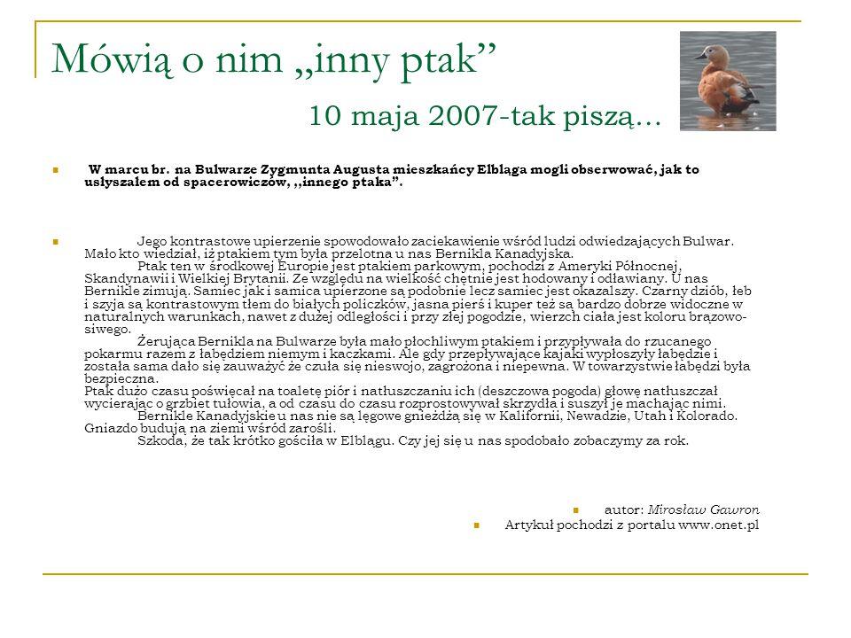 """Mówią o nim """"inny ptak 10 maja 2007-tak piszą…"""