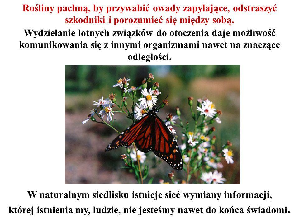 Rośliny pachną, by przywabić owady zapylające, odstraszyć szkodniki i porozumieć się między sobą.