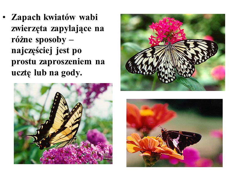 Zapach kwiatów wabi zwierzęta zapylające na różne sposoby – najczęściej jest po prostu zaproszeniem na ucztę lub na gody.