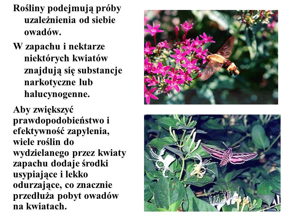 Rośliny podejmują próby uzależnienia od siebie owadów.
