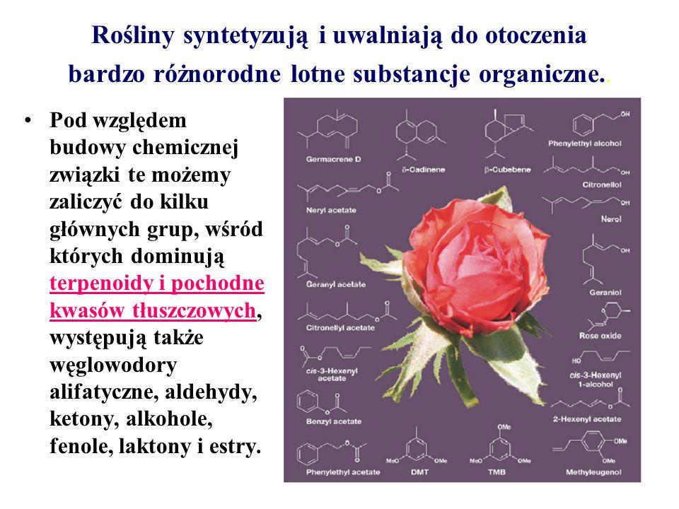 Rośliny syntetyzują i uwalniają do otoczenia bardzo różnorodne lotne substancje organiczne..