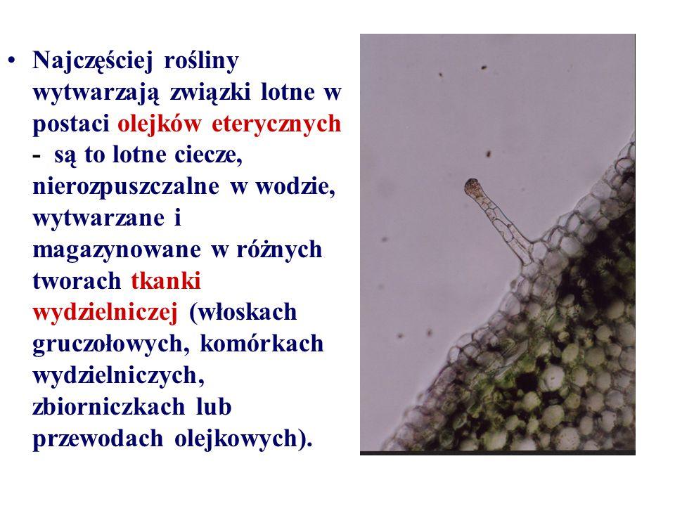 Najczęściej rośliny wytwarzają związki lotne w postaci olejków eterycznych - są to lotne ciecze, nierozpuszczalne w wodzie, wytwarzane i magazynowane w różnych tworach tkanki wydzielniczej (włoskach gruczołowych, komórkach wydzielniczych, zbiorniczkach lub przewodach olejkowych).