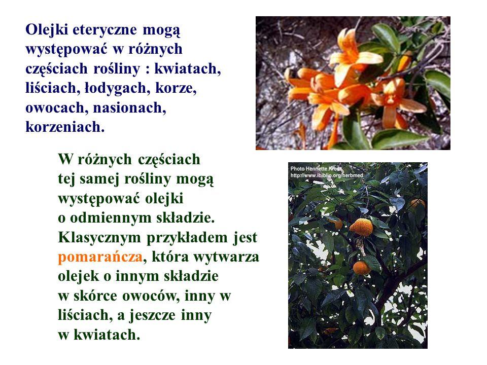 Olejki eteryczne mogą występować w różnych. częściach rośliny : kwiatach, liściach, łodygach, korze,