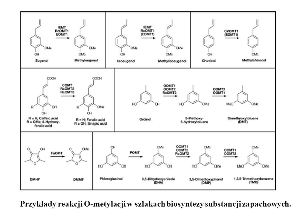 Przykłady reakcji O-metylacji w szlakach biosyntezy substancji zapachowych.