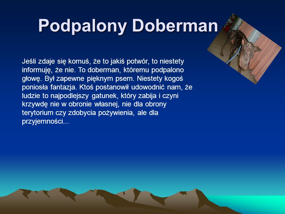Podpalony Doberman