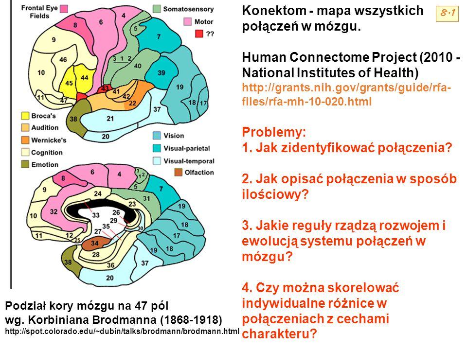 Konektom - mapa wszystkich połączeń w mózgu.