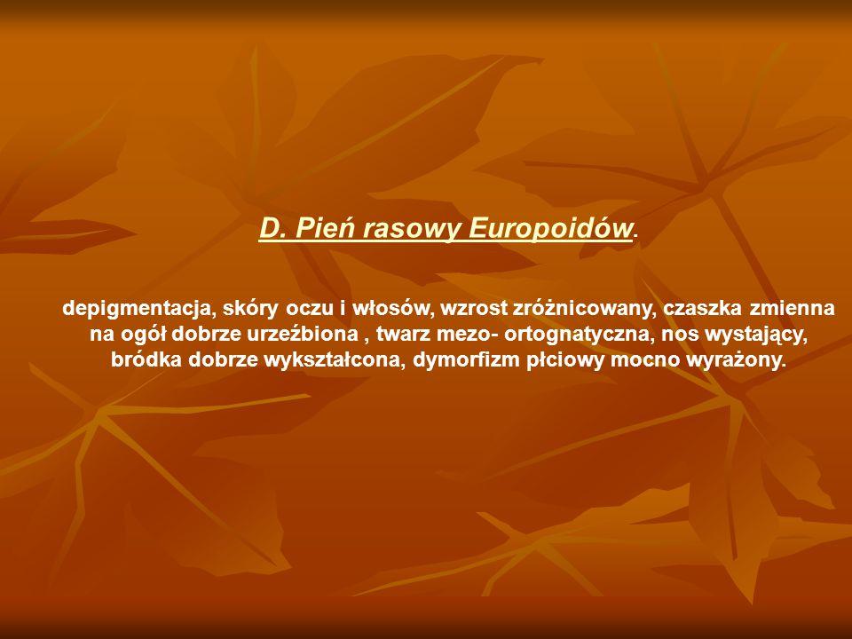 D. Pień rasowy Europoidów.