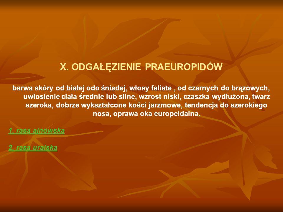 X. ODGAŁĘZIENIE PRAEUROPIDÓW