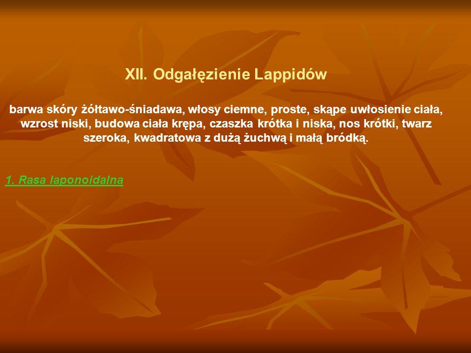XII. Odgałęzienie Lappidów