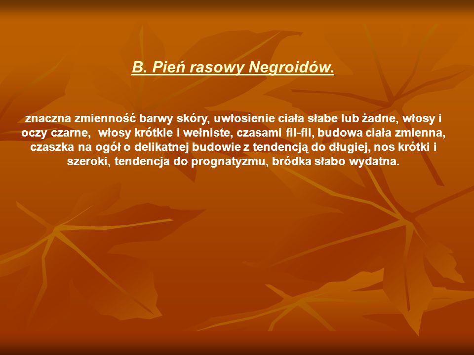 B. Pień rasowy Negroidów.