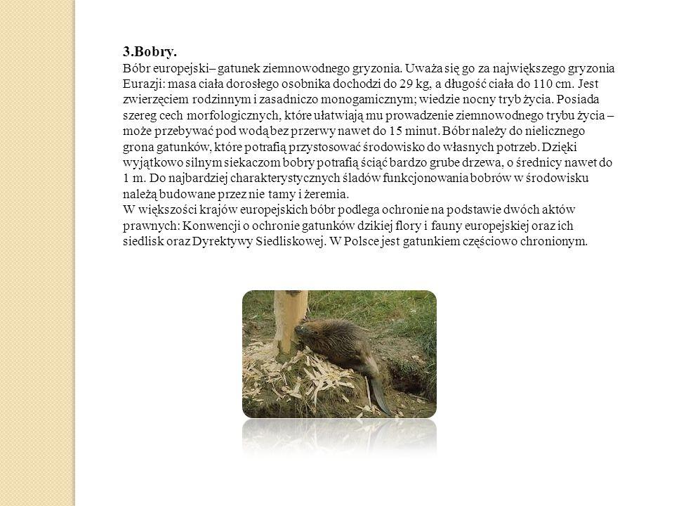 3.Bobry.