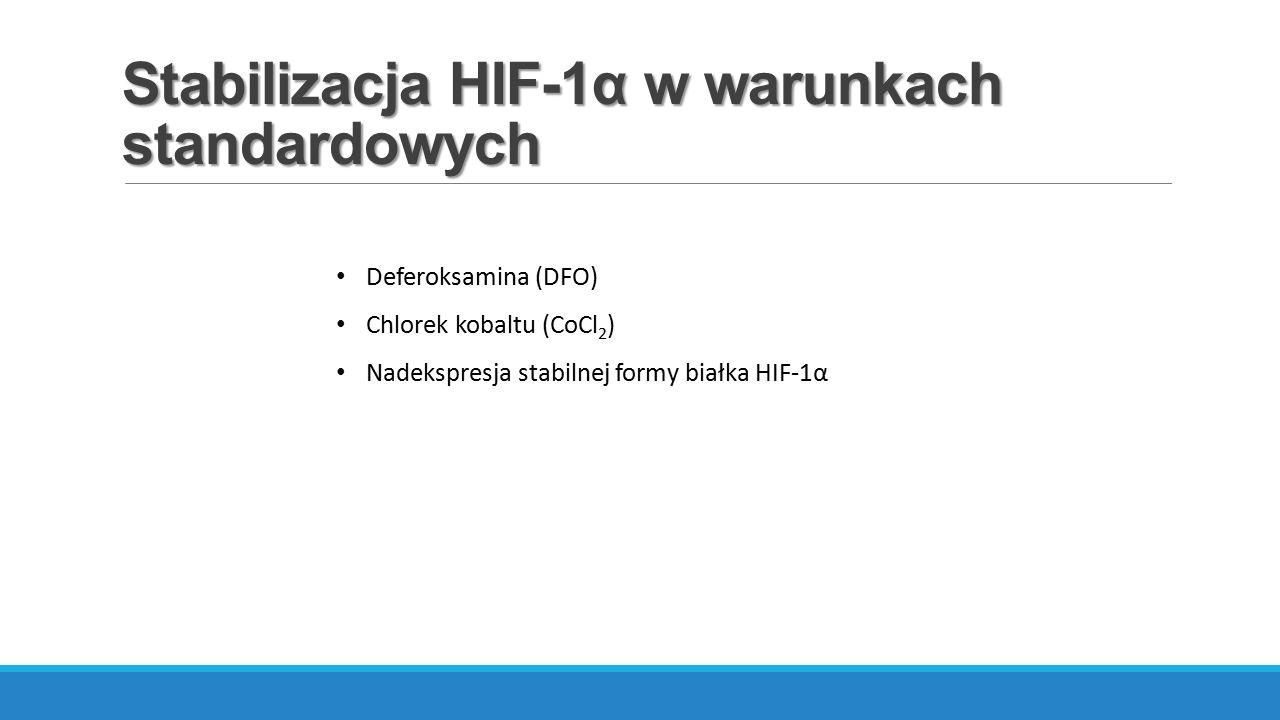 Stabilizacja HIF-1α w warunkach standardowych