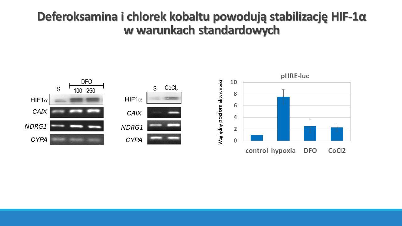 Deferoksamina i chlorek kobaltu powodują stabilizację HIF-1α