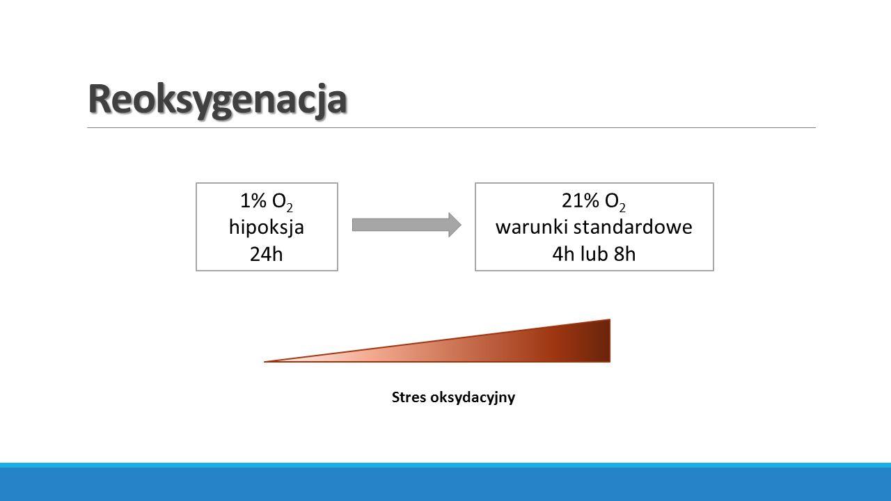 Reoksygenacja 1% O2 hipoksja 24h 21% O2 warunki standardowe 4h lub 8h