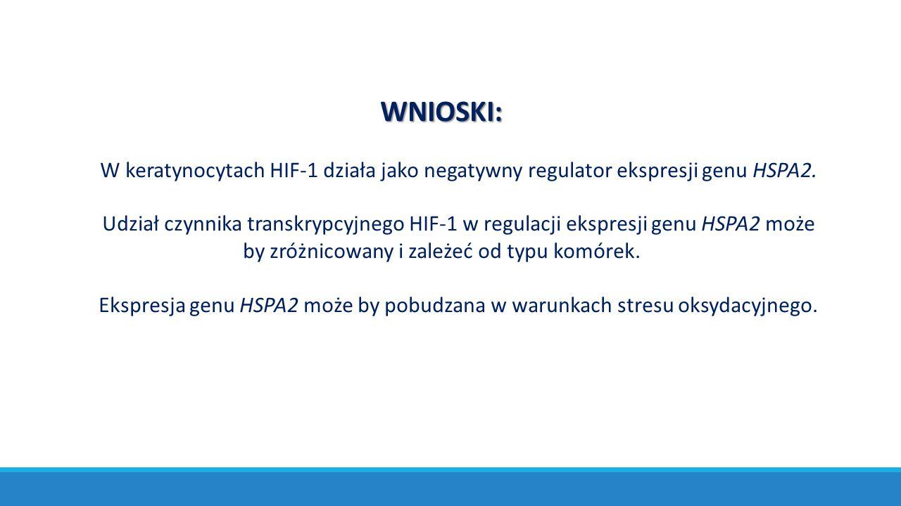 WNIOSKI: W keratynocytach HIF-1 działa jako negatywny regulator ekspresji genu HSPA2.